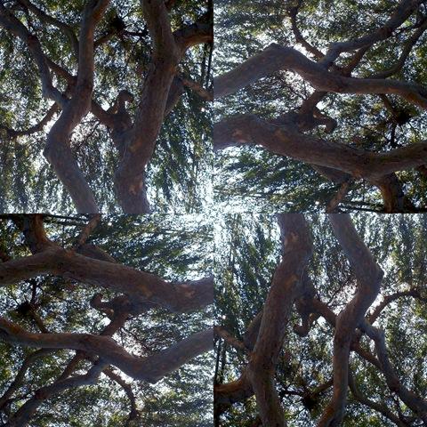 tree sun mosaic