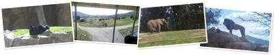 View San Diego Wild Animal Park