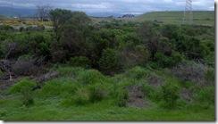 marsh view shrub brush
