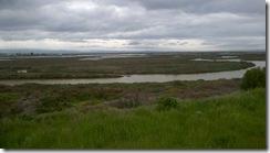 marsh view slough