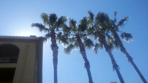 daysun palms