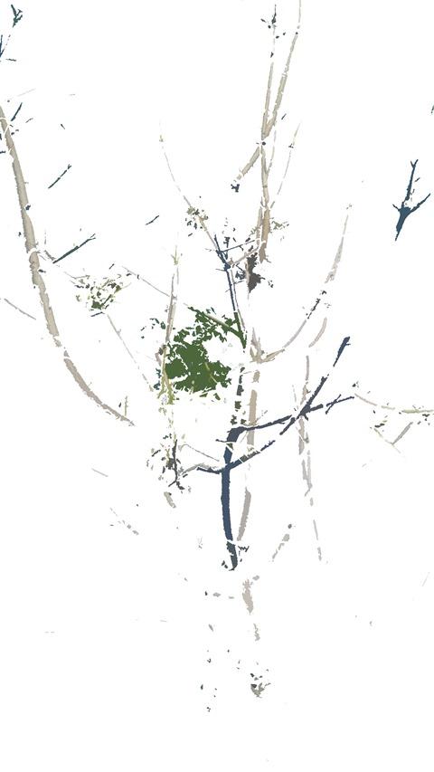nettree