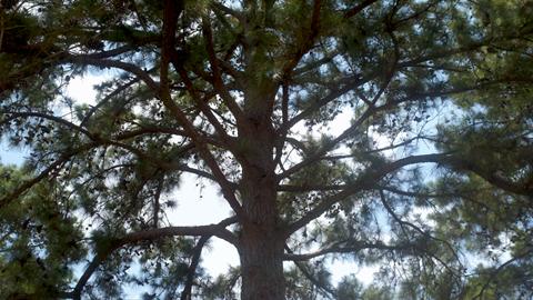 pineball overlay