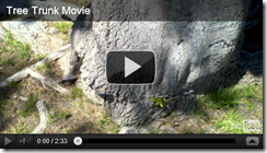 treen trunk movie screen shot