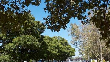treespace