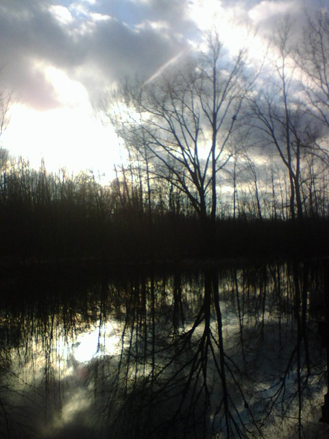 buttonbush swamp