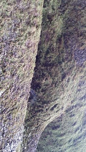wunderlich moss